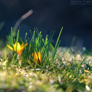 spring_is_coming_by_aljoschathielen-d5wxzcd