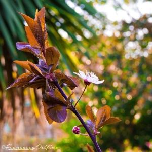 spring_2015_f_by_francescadelfino-d8lb67o